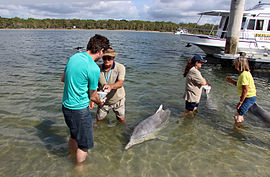 tin can bay dolphin feeding review